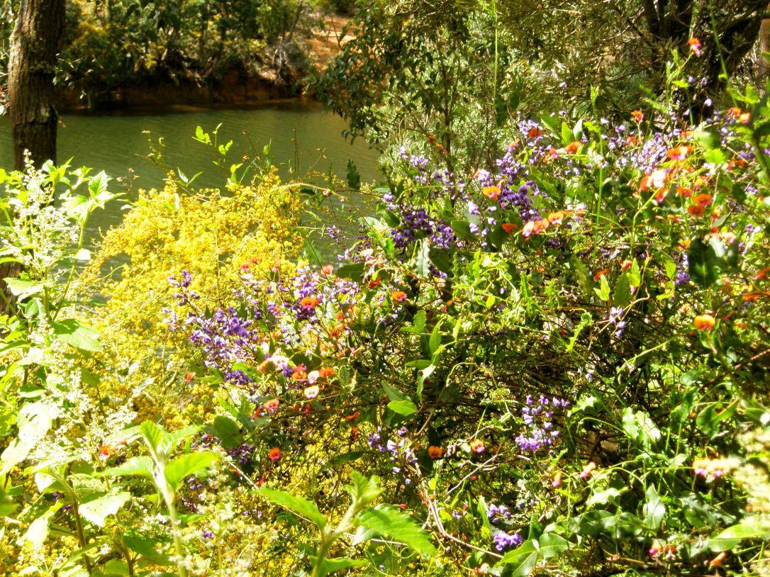 Wildflowers WA
