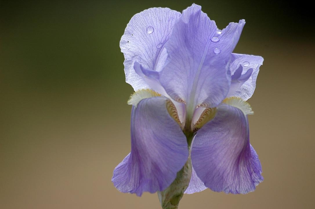 Iris Flower Code